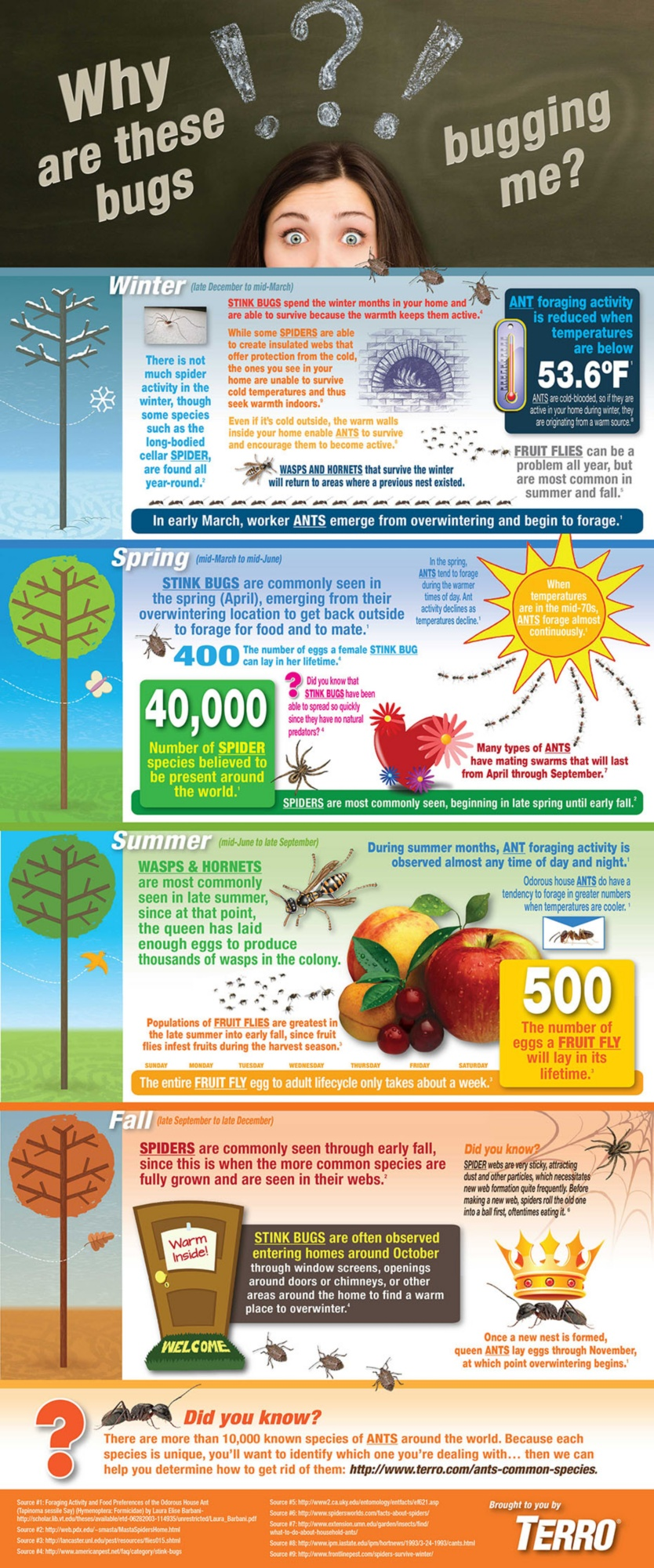 insect seasonality infographic