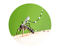 mosquito control products