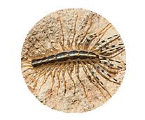 Centipede Library