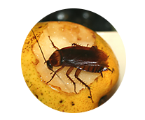 Cockroach Library