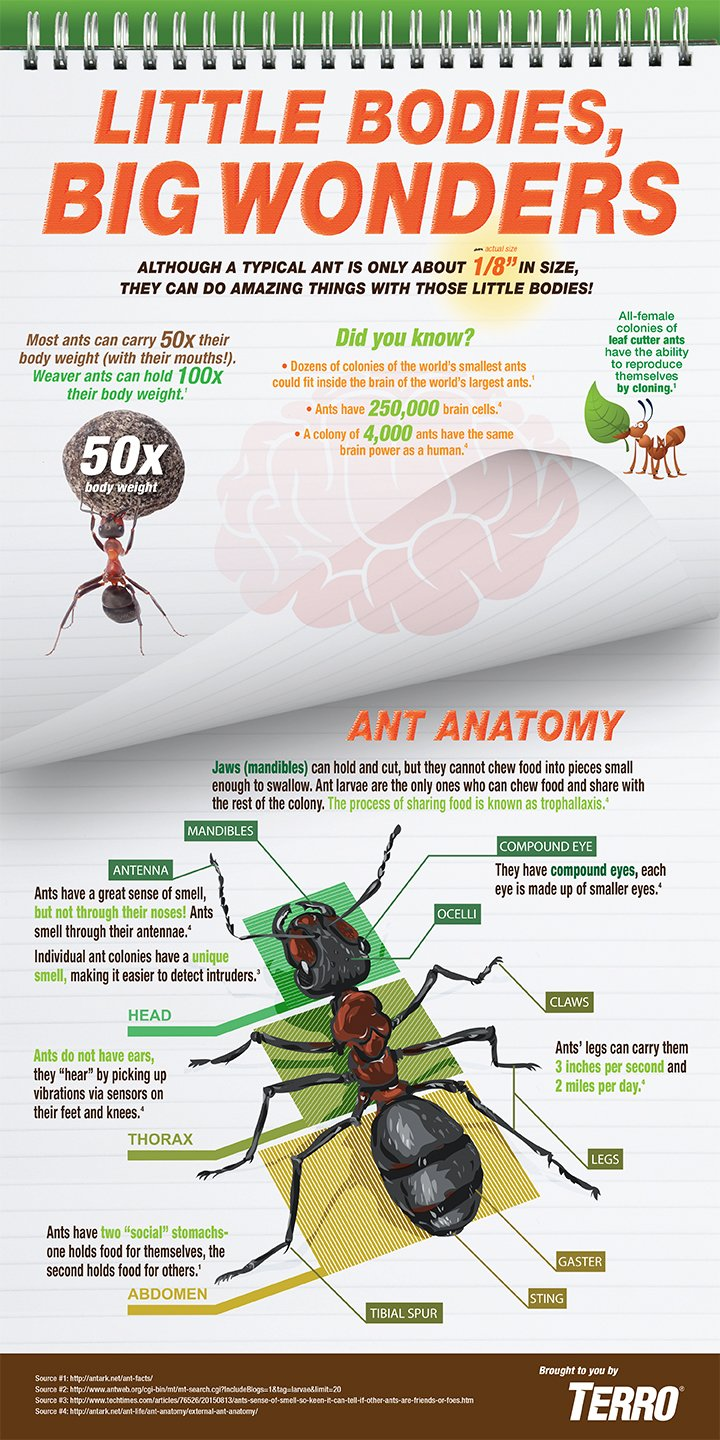 Ant Infographics | Insect Infographics | TERRO®