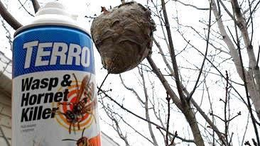 Wasp and Hornet Control