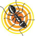 Terro 174 Carpenter Ant Amp Termite Killer Spray Kills On Contact