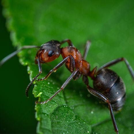 Terro Outdoor Ant Killer Spray Our Best Outdoor Ant Spray
