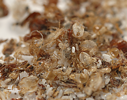 How To Get Bed Bugs Treat Bed Bugs Terro Com