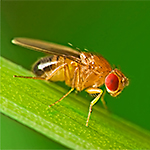 Fruit Fly Questions