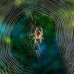 ID spiders by webs