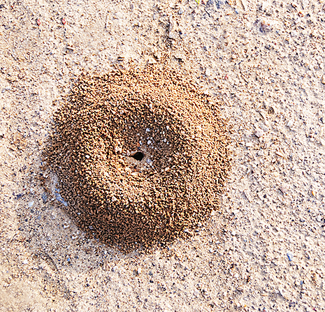 How to Treat Ant Hills