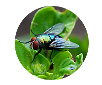 Household Fly Control Products