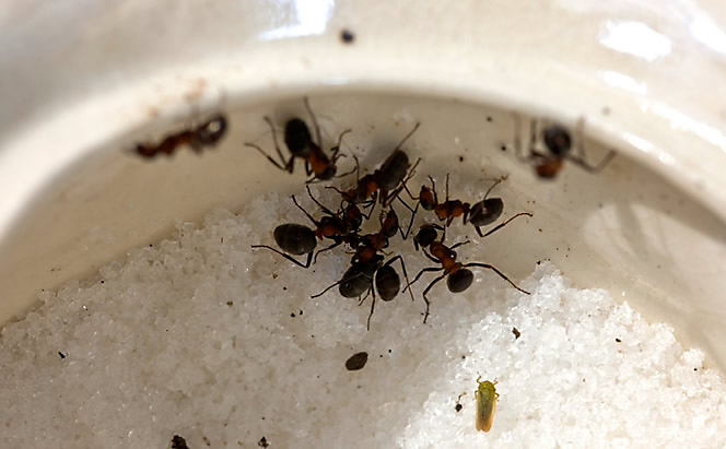 How Get Rid Ants In Car