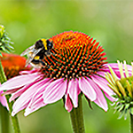Fight Summer Bugs