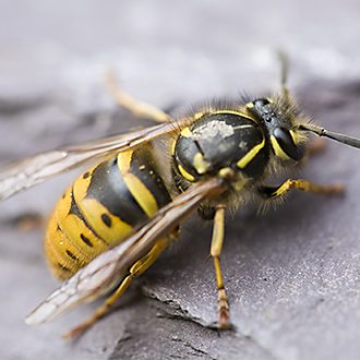 Attract and Trap Wasps