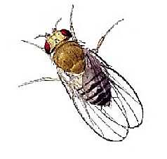 How To Deal With A Fruit Fly Problem In Your Home